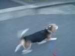 1 Koro is running.JPG